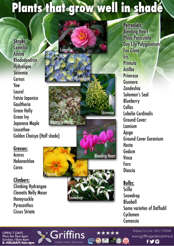 Plants for shaded areas
